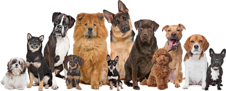 image of many dogs